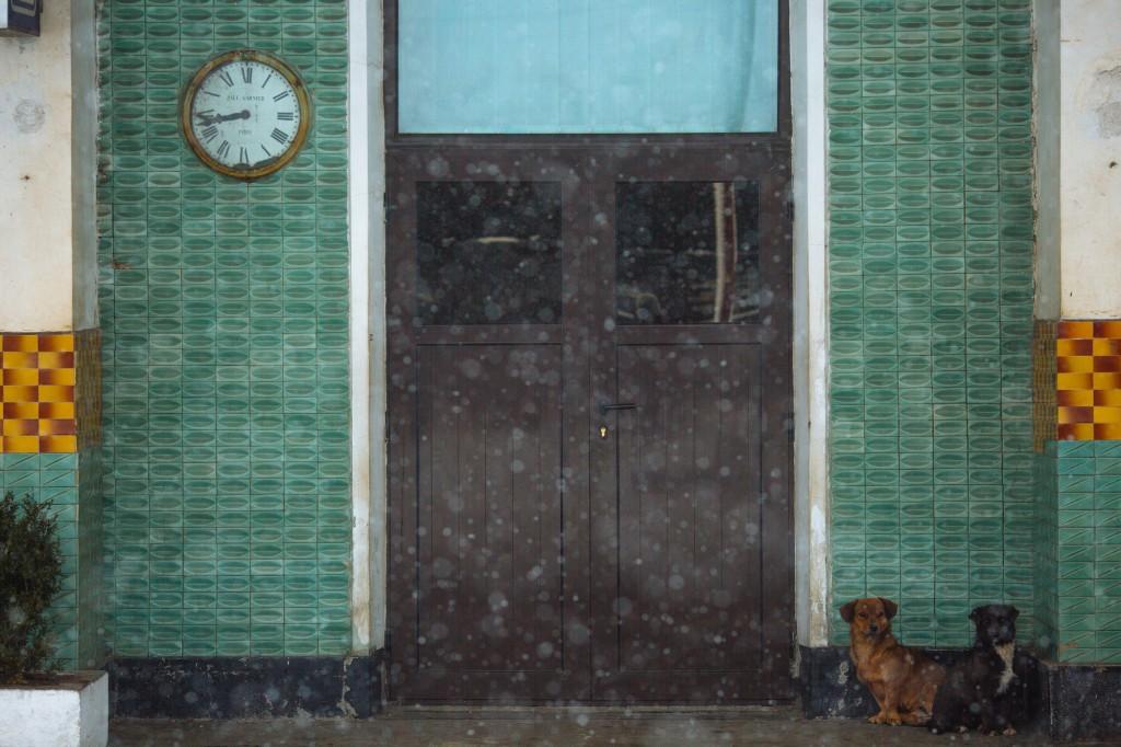 Câini în Piatra-Olt