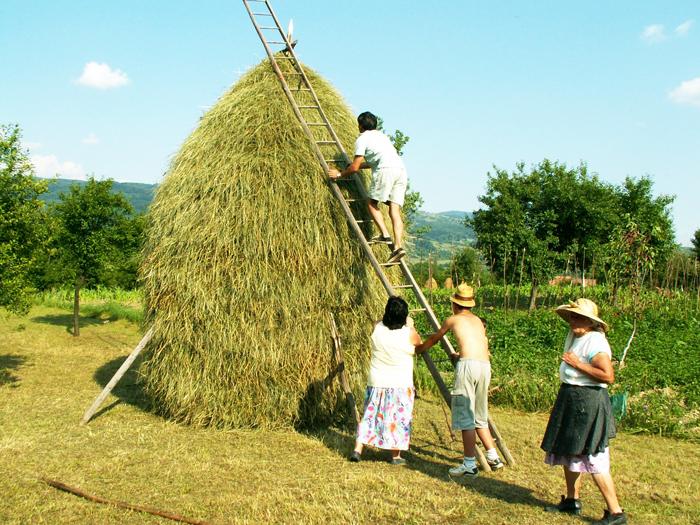 Munca la fân face parte din viața cotidiană a localnicilor, pe tot parcursul anului