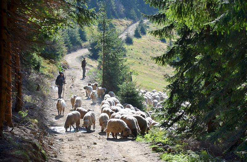 Oile au fost greu încercate de sete în periplul lor pe teritoriul celor patru țări