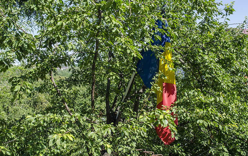 """Un copac cu """"flori"""" tricolore, în curtea casei lui Ion Creangă din Ţicău, Iaşi"""