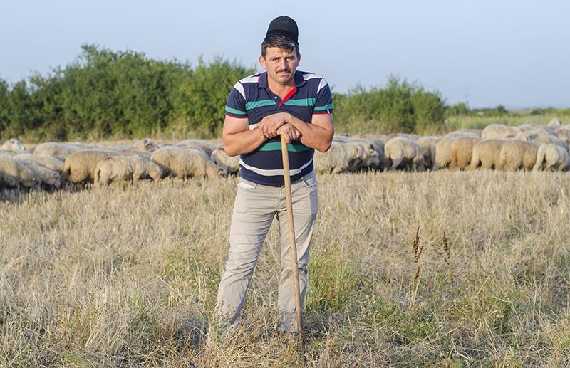 Ionică Sterp este cioban din moşi-strămoşi într-o localitate, Ianoşda (jud. Bihor, Crişana), atestată încă din secolul XIII