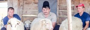 transhumanţă România ciobanul Ionică Sterp despre oaie Mioriţa 2017 slider
