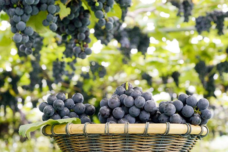 Vinul din Basarabia, veritabil simbol pe plan mondial