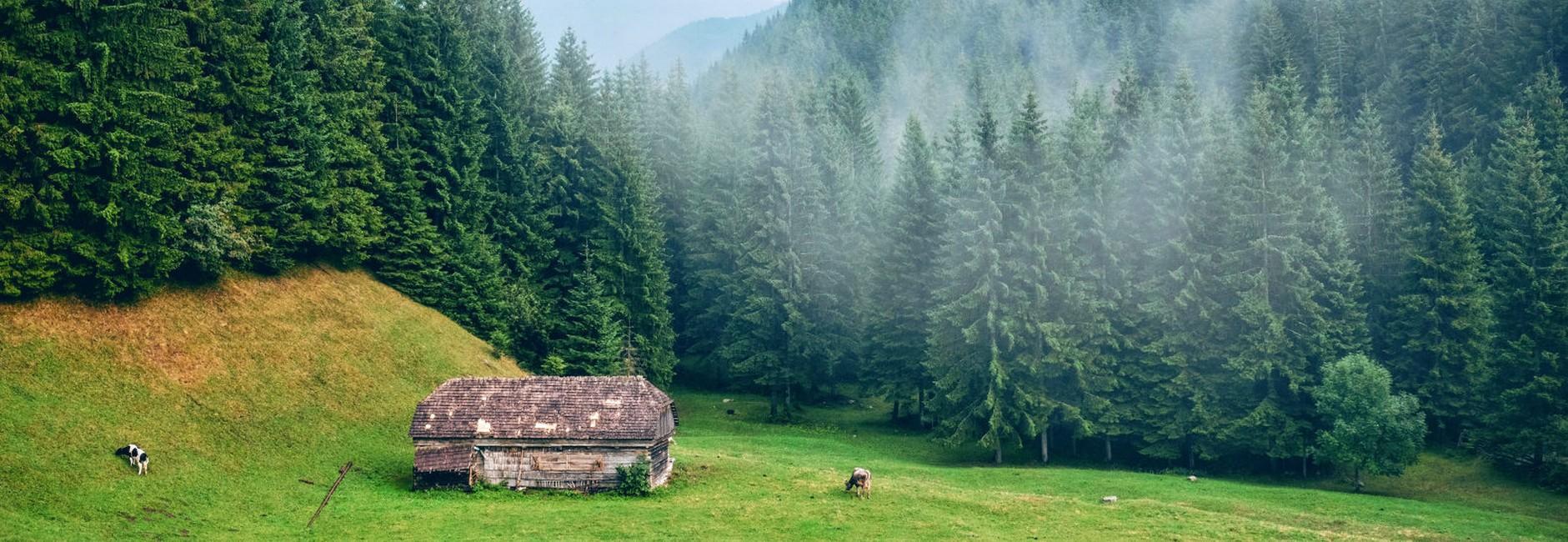 diaspora din păcate vacanță acasă în România slider