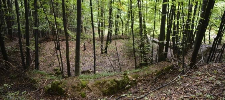 Ruinele și copacii au stabilit o simbioză la Fețele Albe. Sursa: glasul-hd.ro